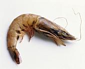 A fresh shrimp