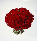 Sumptuous bouquet of red roses