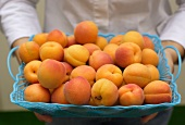 Hand holding plastic container of fresh apricots