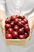 Hands holding woodchip box of fresh cherries