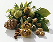 Still life with chestnuts, pine cones and walnuts