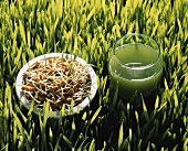 Wheatgrass, wheat sprouts and wheatgrass juice