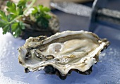 Portuguese cupped oyster 'Fines de Claires'