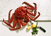 Antarctic king crab