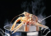 Cooking langoustine in court bouillon