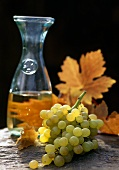 White wine with grapes and autumn vine leaves