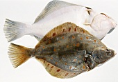 Plaice (upper side and underside)