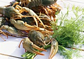 Swamp crayfish with dill