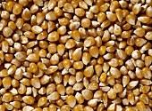 Dried corncobs