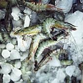 Tiger prawns on ice