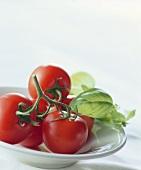 Tomato and basil still life