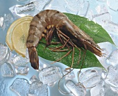 Tiger prawn on ice