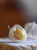 Physalis with transparent calyx