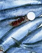 Fish instead of iodine tablet