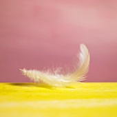 A fluffy, white feather