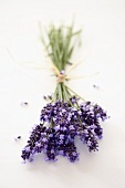 Bunch of flowering lavender