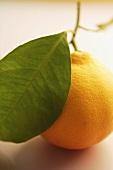 Blood oranges ('Tarocco' variety)