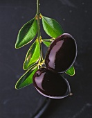 Olive sprig with two black olives