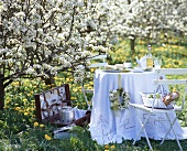 Picnic under pear trees in blossom