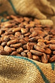 Cocoa beans in jute sack