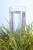 Glass of water in grass