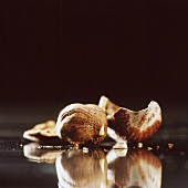 A shelled hazelnut and shell