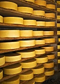 Cheeses in cheese cellar