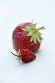 A strawberry and a wild strawberry