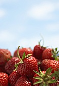 Strawberries with sky in background