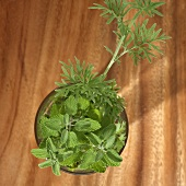 Culinary herbs in a glass