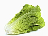 A head of Chinese cabbage