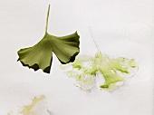A Gingko leaf