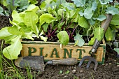 Young vegetable plants