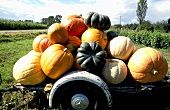 An assortment of pumpkins on a trailer