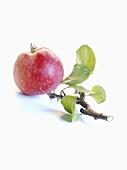 Ein Apfel mit Zweig