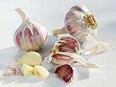 Garlic bulbs and cloves of garlic