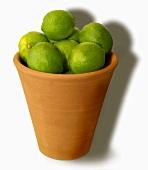 Limes in a terracotta pot