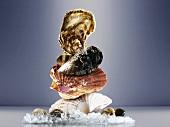 Muschel-Turm auf Eis