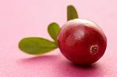 Eine Cranberry