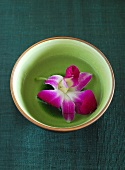Purple orchid in bowl of water