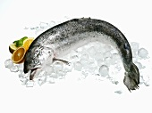 A salmon on ice