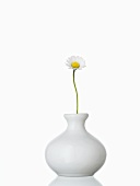 A daisy in a vase