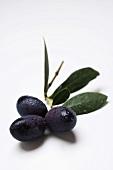 Olive sprig with black olives and leaves