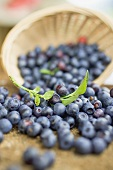 Blueberries with upset basket