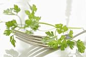 Fresh parsley on fork