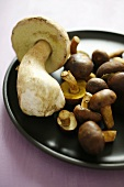 Ceps and bay boletes on brown plate