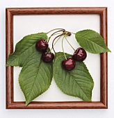 Cherries with leaves in a wooden frame