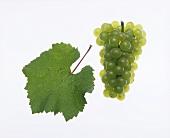 Chardonnay grapes with vine leaf