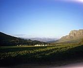 Zorgvliet Wine Estate, Stellenbosch, S. Africa