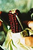 Hand holding red corncob